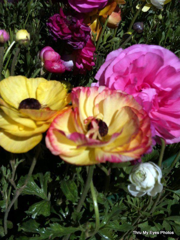 carlsbad flowers 2015