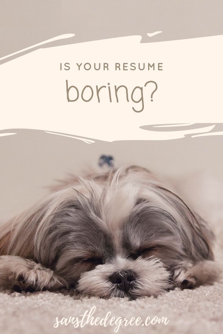 8 Reasons Your Resume Got Tossed Training Your Dog Training