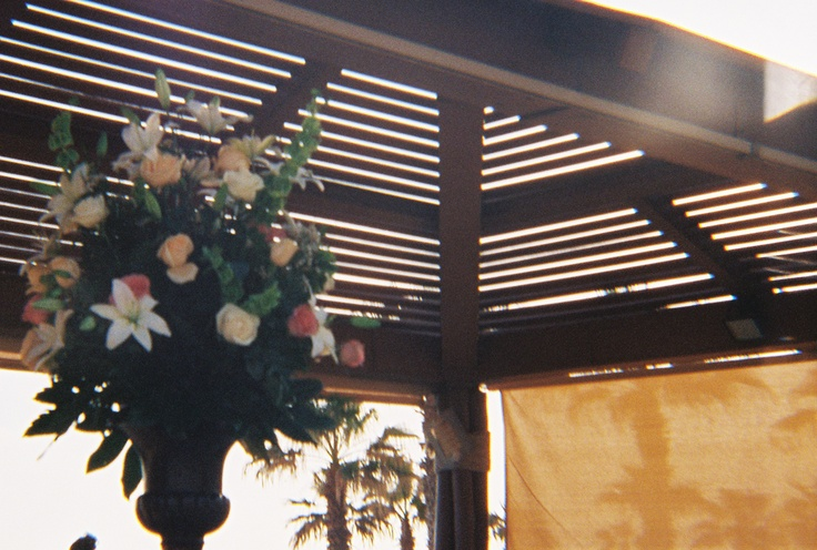 35mm film photo with the Diana +   by Tere Jeache   at Melina and Will's wedding.