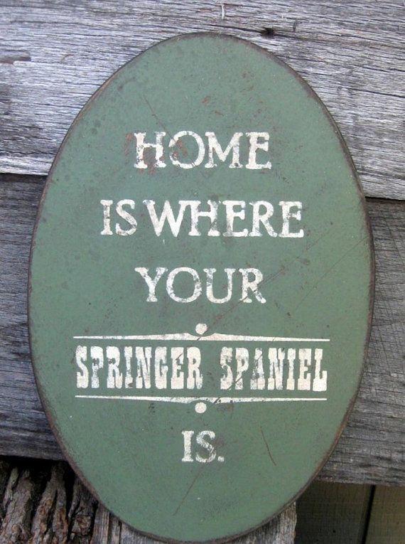Engelse Springer spaniël