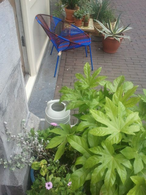 Wish: a street-garden of my own one day, like this one from Wilderness, Bilderdijkstraat, Amsterdam.