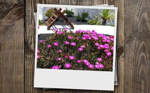 Gardena-France-Roof-Top-Toit-Terrasse-Vegetalisee-2017 La vie sur une terrasse de toit ou dans un roof top est assez rude pour les plantes. En effet, elles doivent braver le soleil, la pluie, le froid, les vents forts tout en restant verdoyantes. Si vous ne choisissez pas les bonnes plantes pour votre terrasse citadine, vous allez bientôt tirer vos cheveux à cause des fleurs fanées, gelées, flétries ou noyées. Dans le pire des cas, vous constaterez que vous devez remplacer ou tout au moins…