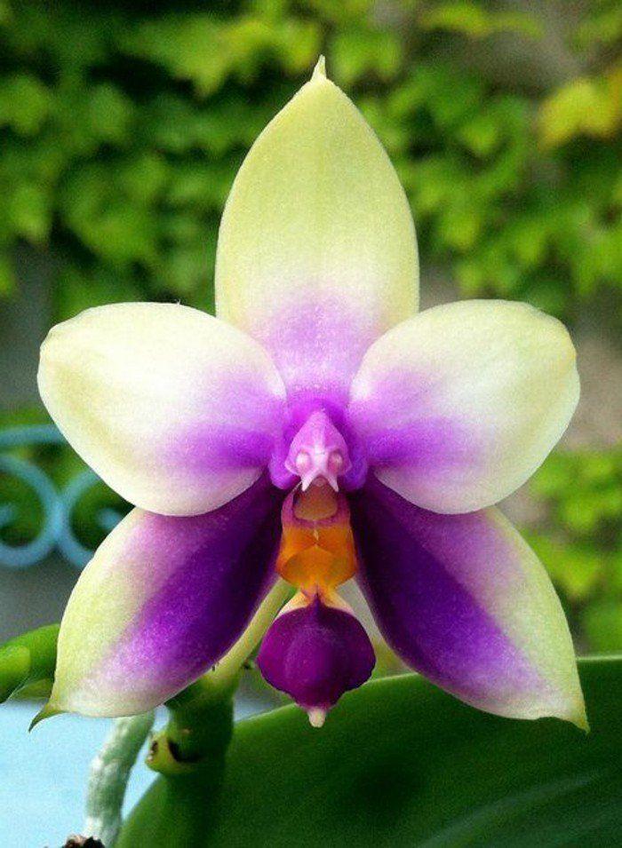 Les 25 meilleures id es de la cat gorie orchid e sauvage sur pinterest couleur cheveux rouge Comment entretenir orchidee