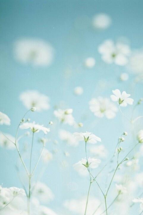Wachten totdat de eerste bloemen in bloei komen te staan.