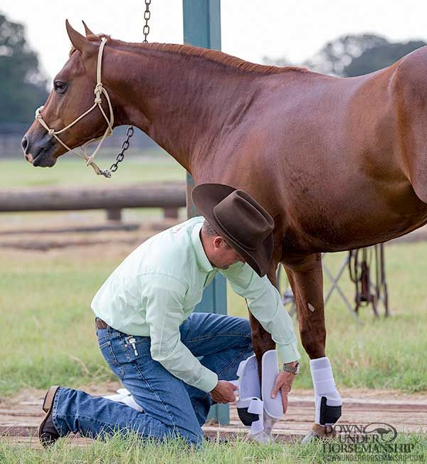 Training Tip: Fix Your Horse's Fidgety Feet – Downunder Horsemanship