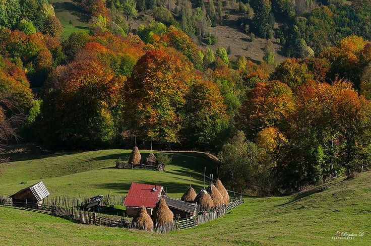 Magical-land-Sureanu http://bogdandanphotography.wordpress.com/2014/10/11/muntii-sureanu-in-splendoarea-toamnei/