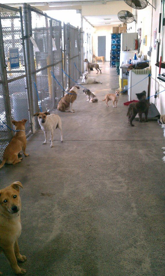 """""""Intake"""" *** Just your average day at any US """"shelter."""" One day. One shelter. Dogs dumped by their loser """"owners."""" Some will make it out. Unfortunately, for most dogs this moment will be the beginning of the end (this is a kill shelter); unless networked, shared, pledged for, pulled by rescue/foster in hopes of finding them a FURever home...  How could anyone walk away? Could you? Good, healthy, loving, heart-broken, betrayed animals sit waiting at your local shelter. ADOPT. FOSTER. VOLUNT"""