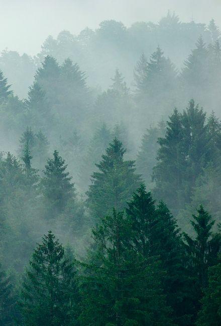 Misty forest.   Via Tumblr user Issac Holden