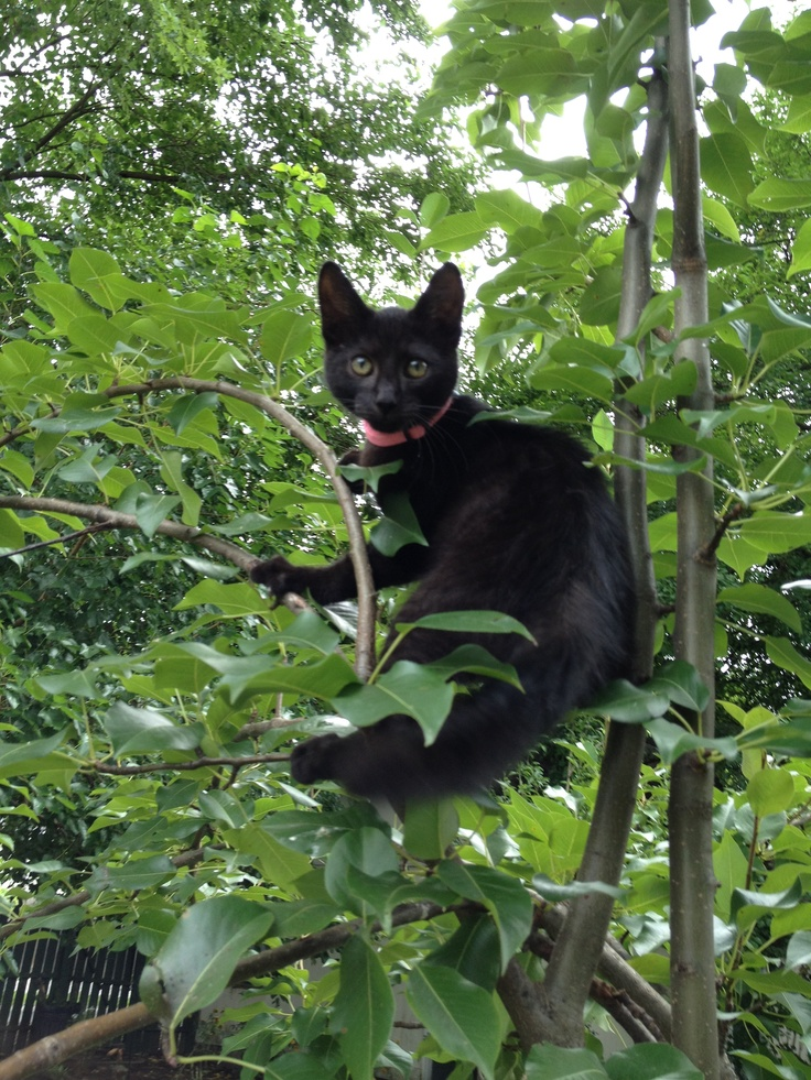 Fritzi in the tree!