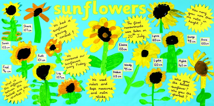 Beautiful summery sunflower display - bringing maths into science - taken from Creative Curriculum through Science