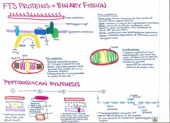 8 best med tech notes ideas study guide images on pinterest rh pinterest com med tech study guide test med tech study guide brooklyn for nc