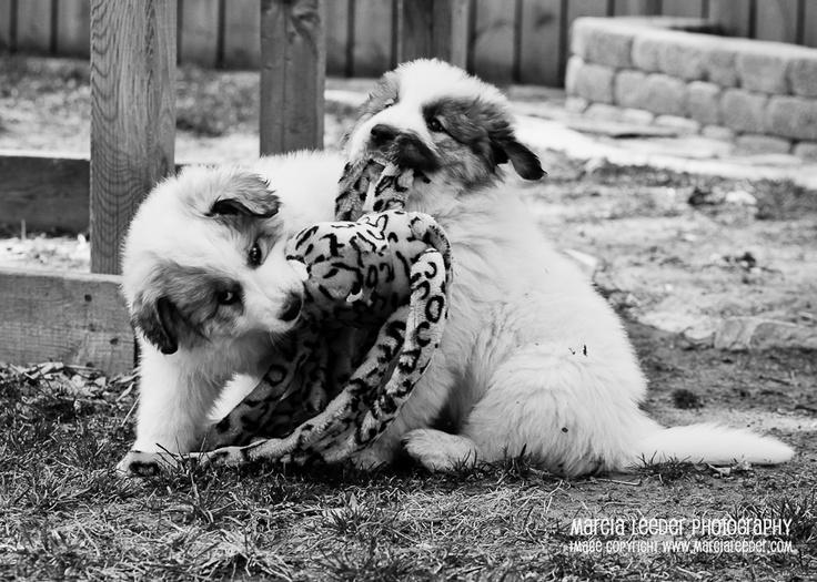 """Dog toy: 5 dollars, bath time: 10 dollars, the bond between siblings…priceless!"" - Amanda Anderson  www.marcialeeder.com"