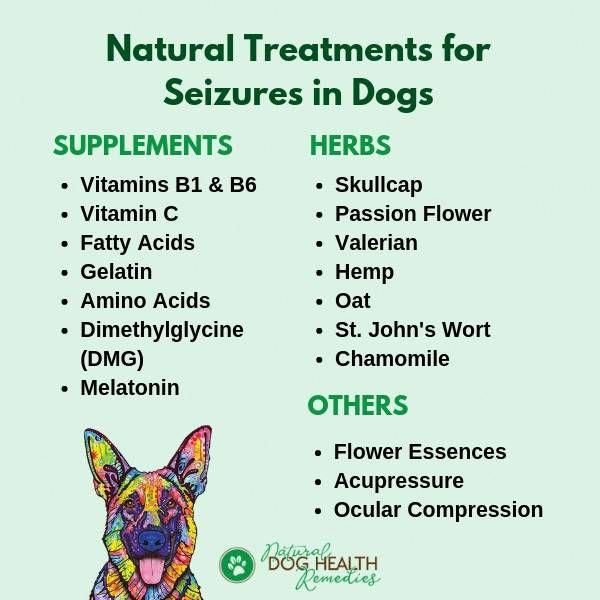 Home Treatments For Canine Seizures Dogjointpain Natural Dog