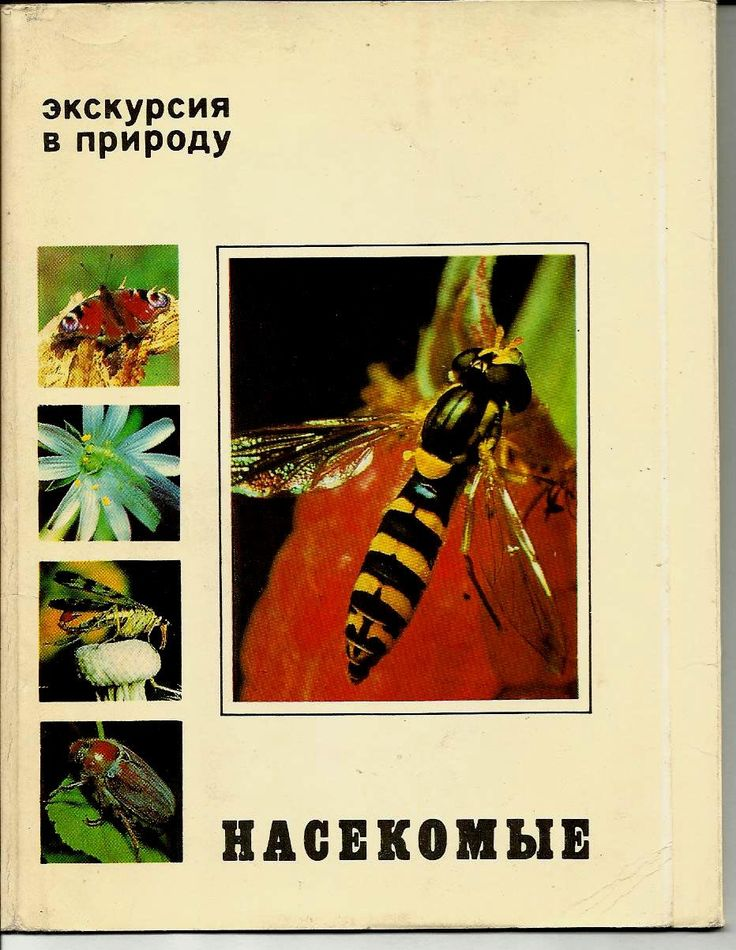 Insects - Butterfly, Dragonfly, Beetle  - Set of 25 - Russian Vintage Postcard Photo Unused 1980 by LucyMarket on Etsy