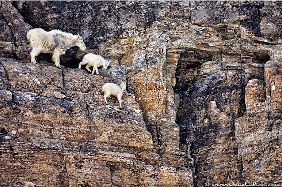 Zo leven berggeiten!
