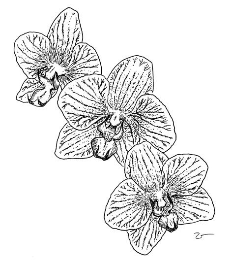 Coloring pages of christmas orchids ~ 45 best images about Sometimes I just need to mother ...