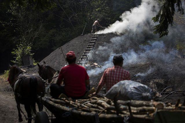 ITTHON VAGY - NÉZZ KÖRÜL NÁLUNK...: Erdőfüléről bővebben / Folytatás a posztban