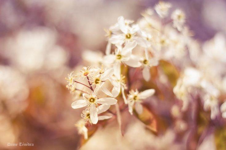 Ben merkezindeki odağı bir türlü kaybedemeyen mutsuz insanlar için en yeni odaklanmadır doğa ve bahar. Gözünü karanlık ve soğuk yalnızlıklar bürümüş gri ruhlara çiçek olup açar, umutla.. - Meo