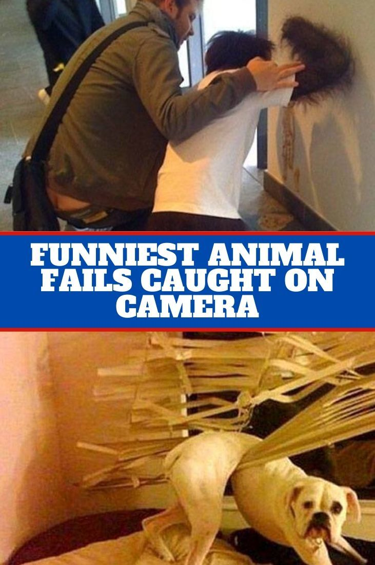 Funniest Animal Fails Caught On Camera in 2020 Funny