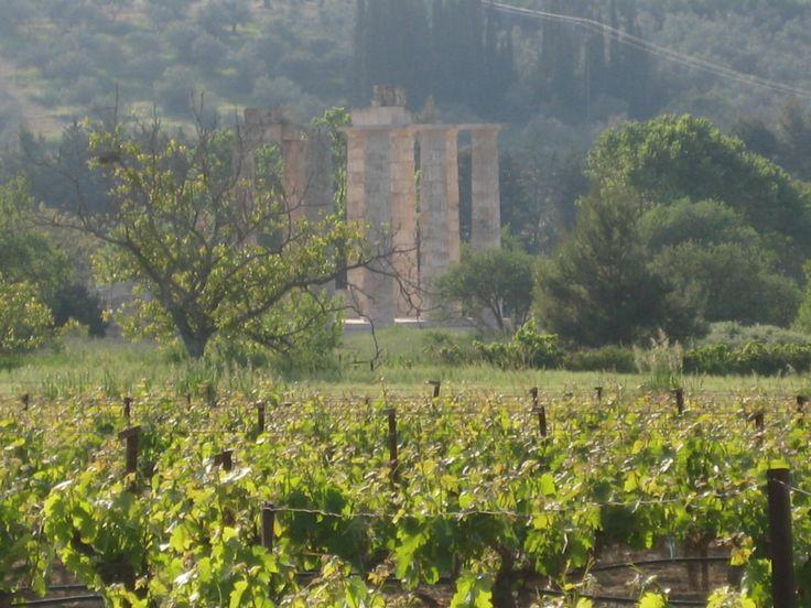 Greek Terroir: ancient ruins + modern vineyards.