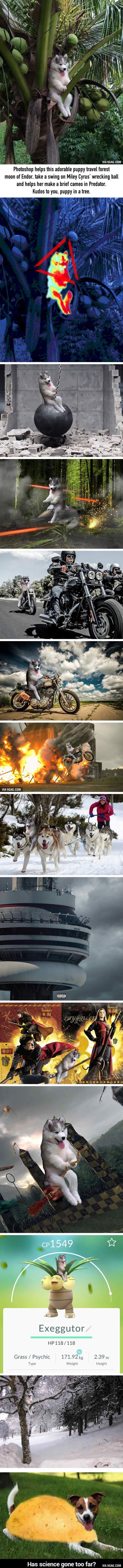 Photoshop Husky