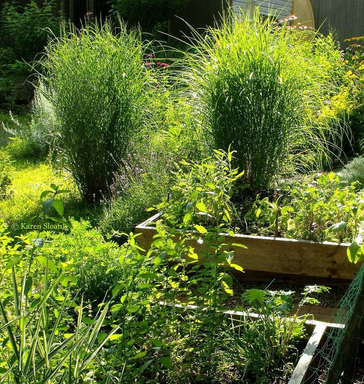 Raised beds & ornamental grasses