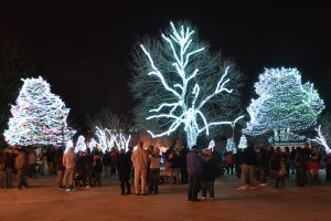 The light before christmas at the Toledo Zoo