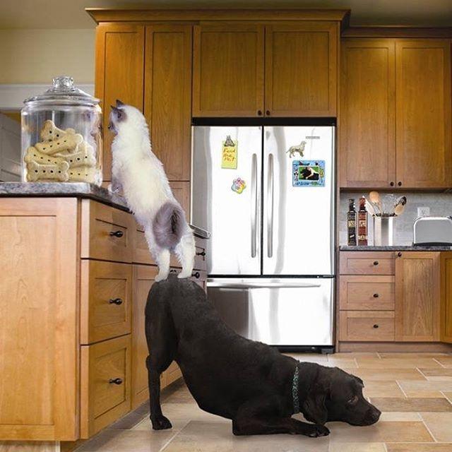 картинка как животные помогают друг другу этом хищники следят