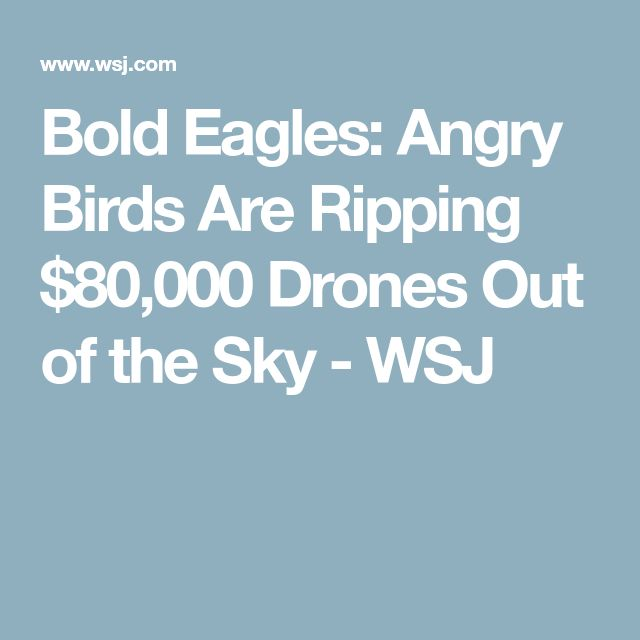 Bold Eagles: Angry Birds Are Ripping $80,000 Drones Out of the Sky - WSJ