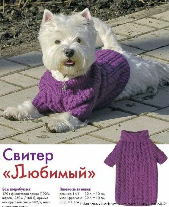 Kedi köpek kıyafetleri