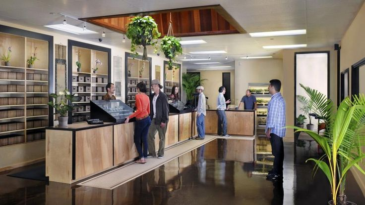 The Top 5 Denver Marijuana Dispensaries