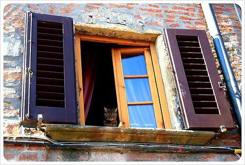 Montaione Cat