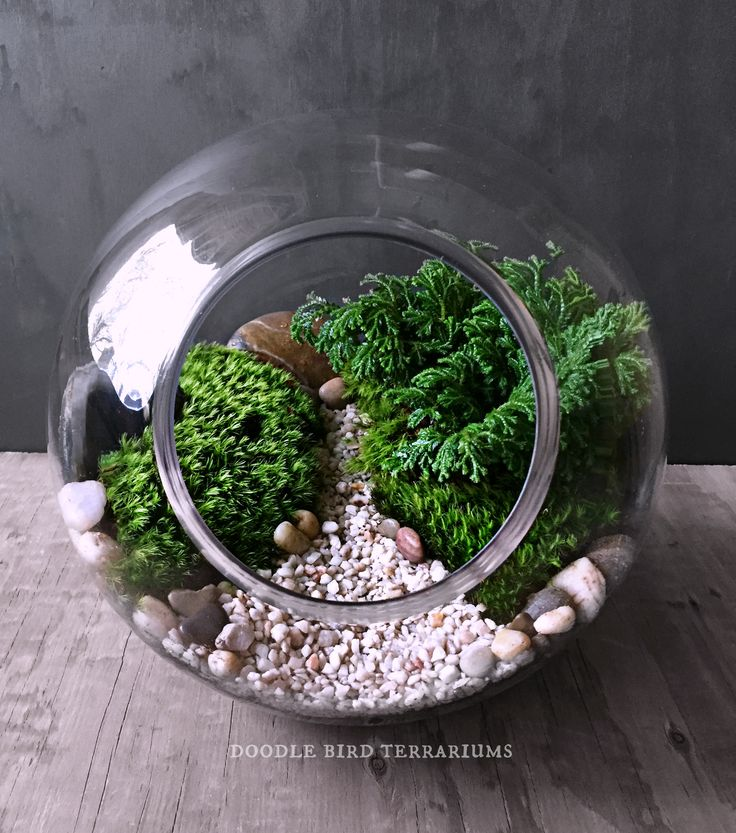 miniature garden scene in glass orb table centerpiece by doodle bird terrariums pflanzen. Black Bedroom Furniture Sets. Home Design Ideas