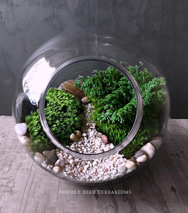 551 beste afbeeldingen over terrariums and miniature gardening op pinterest terrarium. Black Bedroom Furniture Sets. Home Design Ideas