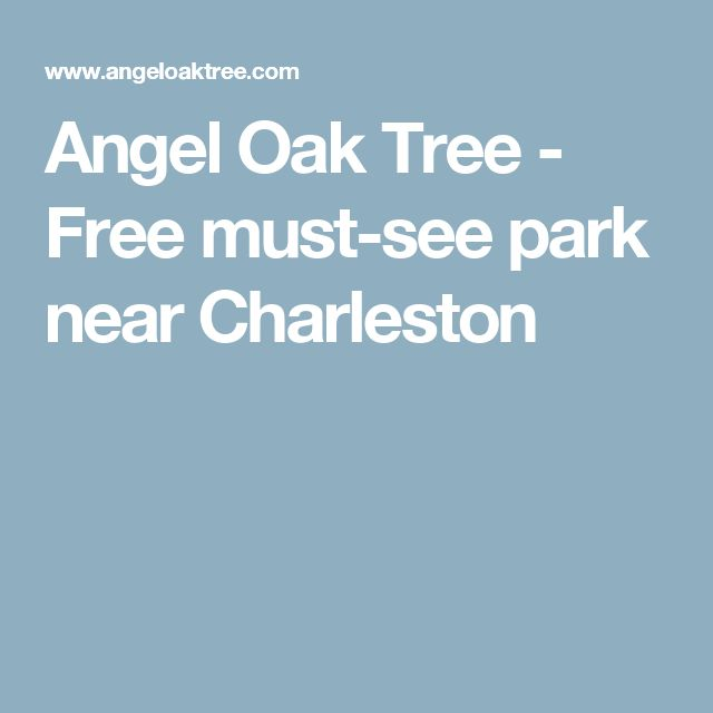 Angel Oak Tree - Free must-see park near Charleston