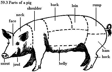 guinea pig diagram label pig diagram worksheet pig labeled body parts diagram sketch coloring page ... #14