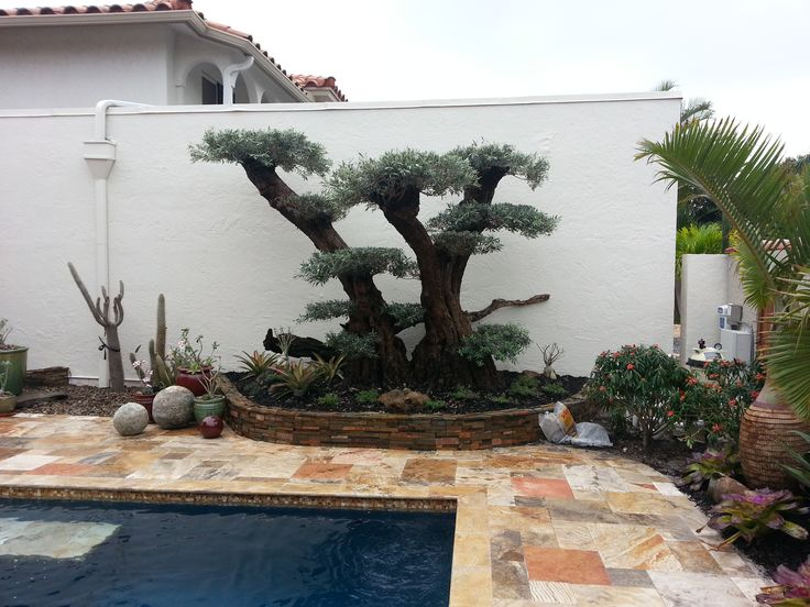 1301 best images about bonsai on pinterest prunus for How to make an olive tree into a bonsai
