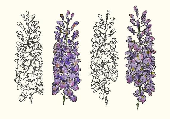 Hand Drawn Wisteria Flower Vector Illustration Vector Art Design Vector Art How To Draw Hands