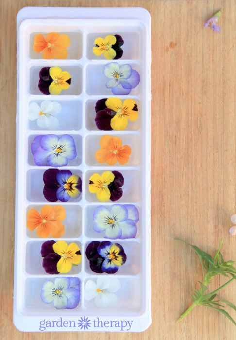 How to make the perfect floral ice cubes...with a few tips like why you should boil the water and how to keep them from floating to the top!
