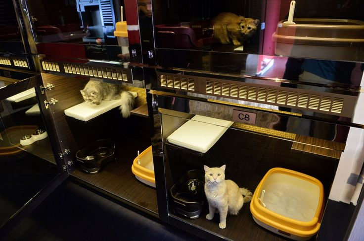 The Purrfection Suites, a luxury cat hotel in Singapore.                                                                                                                                                                                 More