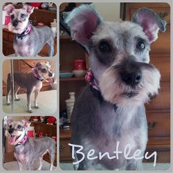 28 best sunny dawn house call pet grooming happy clients images on photos sunny dawn pet grooming solutioingenieria Image collections