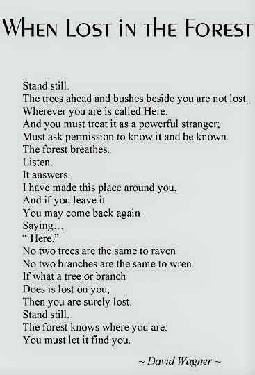 """When Lost In The Forest"", A Poem By David Wagner"