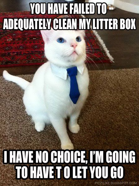Funny Clean Memes Facebook : Best images about cat litter on pinterest