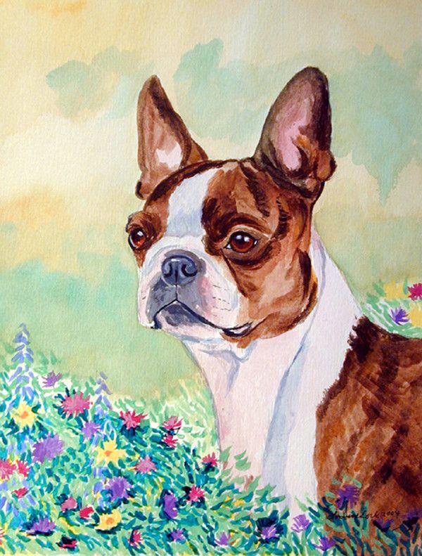 Amazing 349 Best Boston Terrieru0027s Images On Pinterest   Boston Terrier Art, Boston  Terrier Love And Boston Terrier Puppies