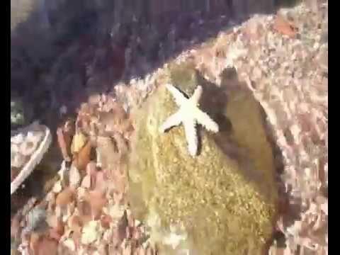 Marina Plaza Tala Bay 4*.Опасности на пляже красного моря Ядовитые рыбы ...