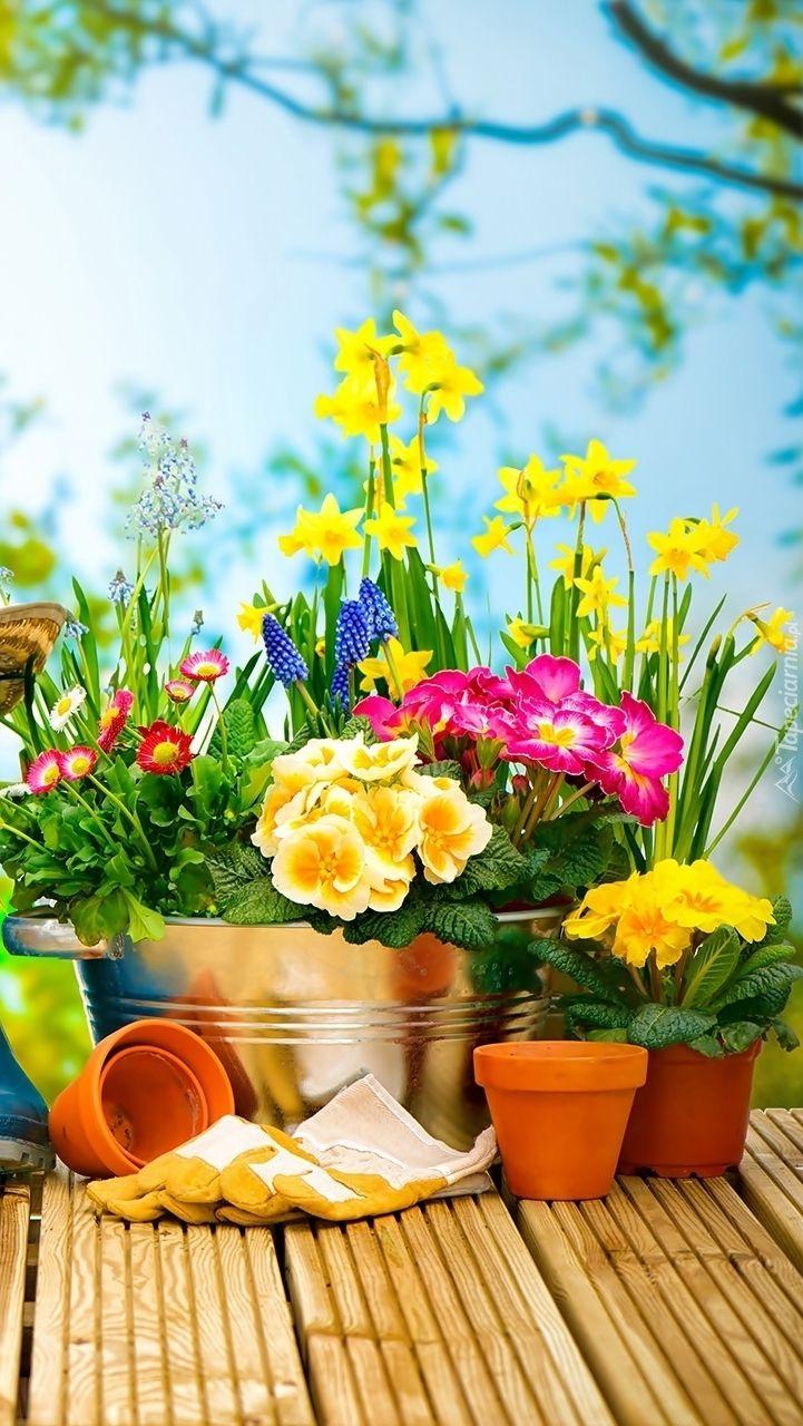Wiosenne Kwiaty W Donicach Tapeta Na Telefon