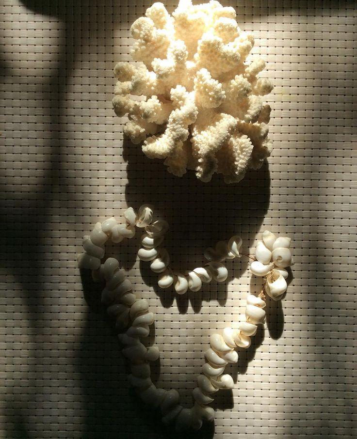 Tesouros #coralsea#seashells #myworld #athome#white #photooftheday #atmosphere#dazulterra