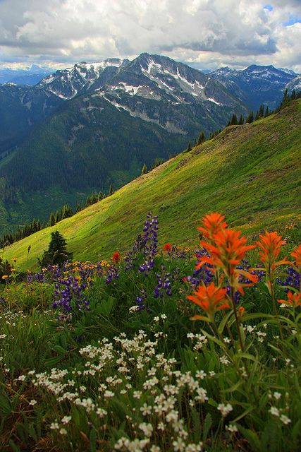 A beautiful flower filled meadow near North Bend, British Columbia