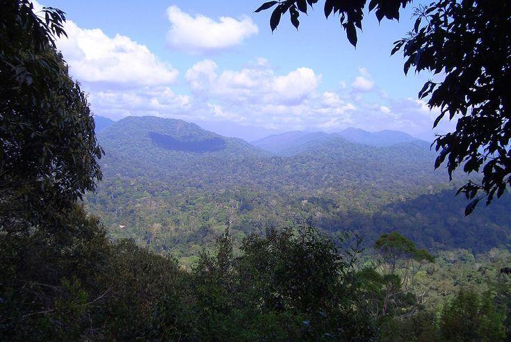 Taman Negara – Travel guide at Wikivoyage