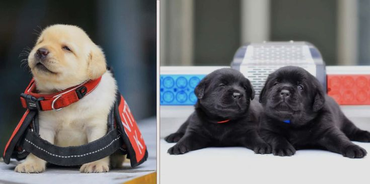 Police Department Hire New Recruits And They Are The Most Adorable Trainees You'll Ever See